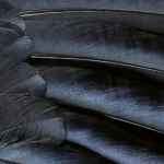 Grey Feather Wallpaper