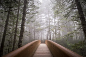 Forest Bridge White Gamut Wallpaper