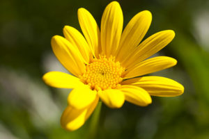 Yellow flower wide gamut photo.